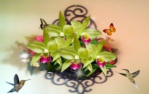 hummingbirds and butterflies around orchids, collage