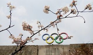 olympic rings on top of wall behind cherry blossom