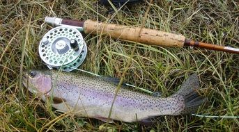 rainbow trout and fishing rod
