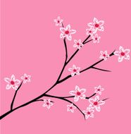 Cherry blossom spring branch with flowers blooming vector illustration N2