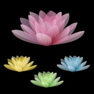 Lotus flowers isolated on a black background