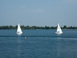 sailing boats on the lake in summer