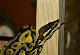 python near the wooden post