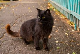 black cat on the path with autumn leaves