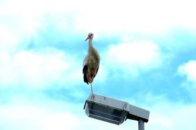 Stork on the light pole