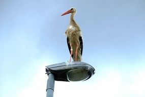 stork perched on the street light