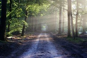 Road among the wood in the rays of the sun