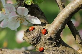 ladybugs on a tree trunk
