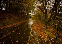 wet road autumn fall