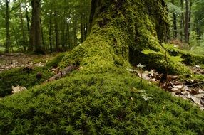 forest moss undergrowth
