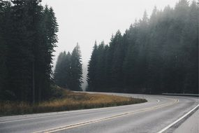 highway in the misty forest