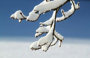 branch with white snow
