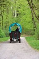 horse drawn carriage in a park