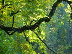curve tree branch