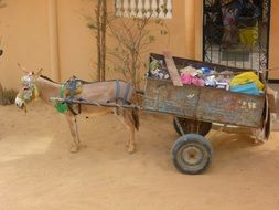 donkey with a wagon