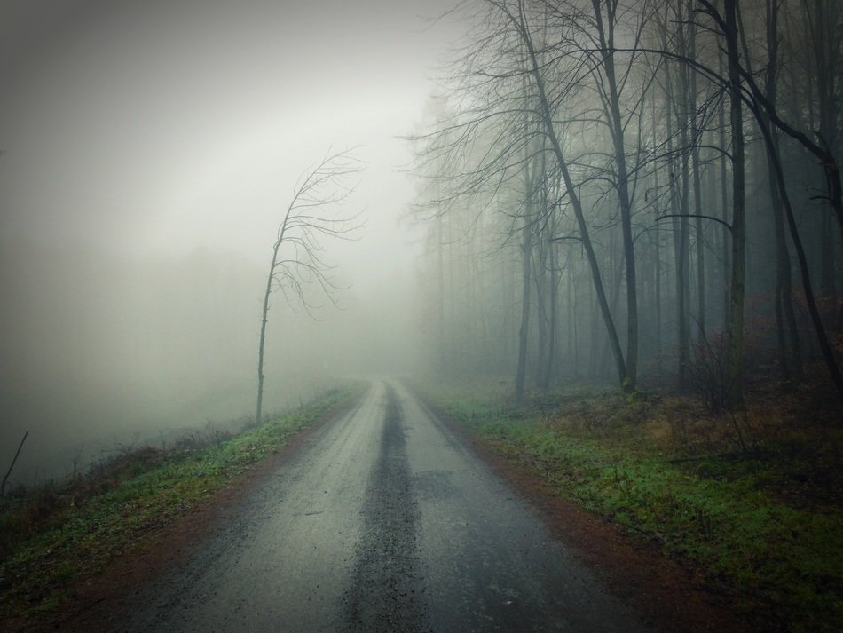 dirt road fog