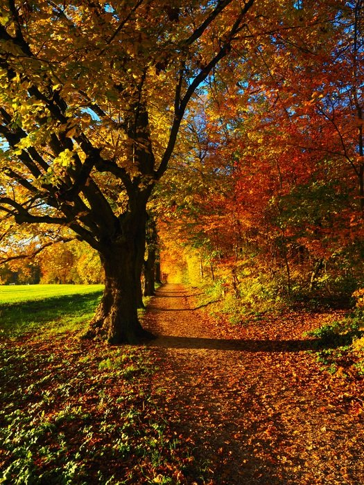 colorful autumn tree in sunny day