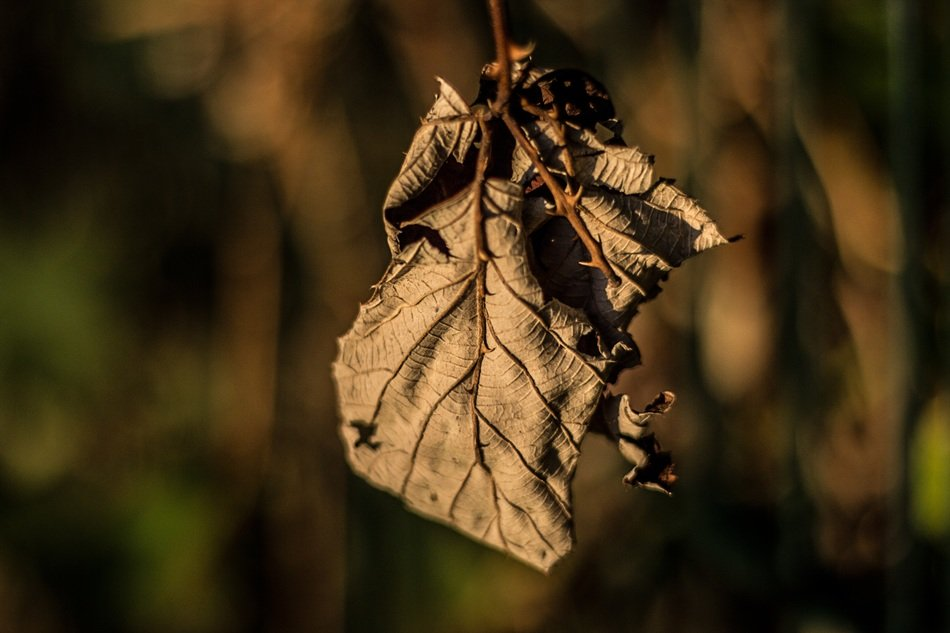 dry leaf under the sunlight