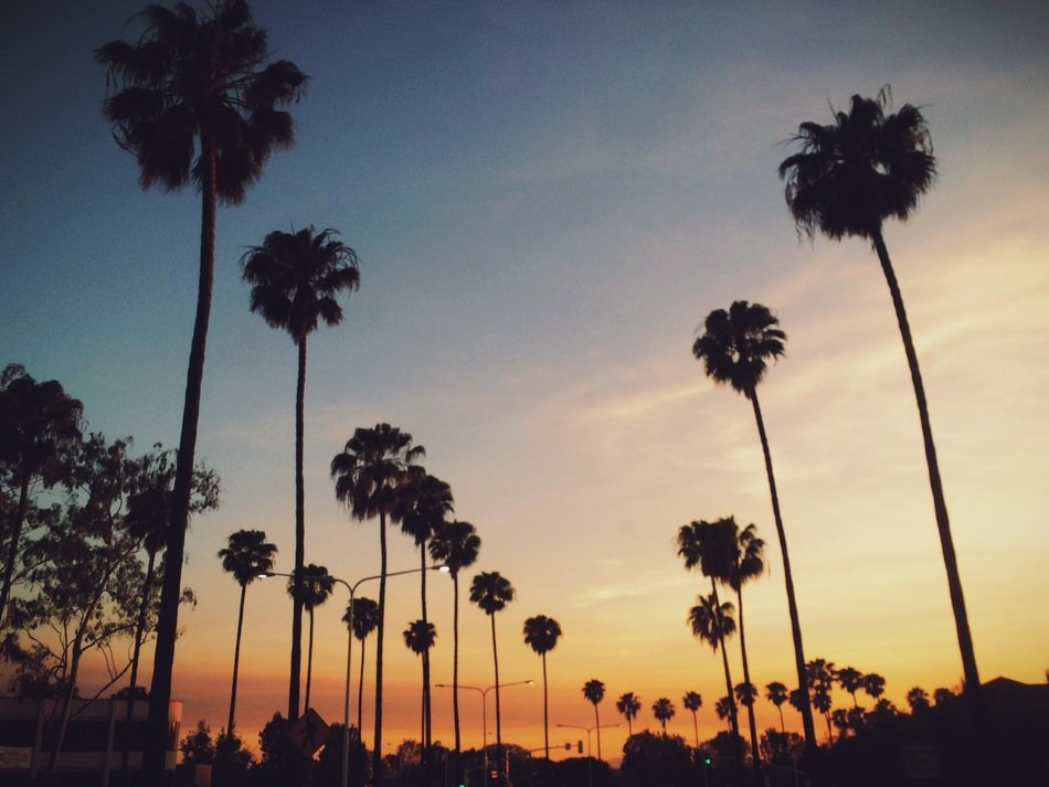 cute palm trees sunset