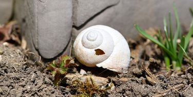 empty snail shell on ground