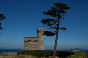ancient castle near the sea and a lonely tree