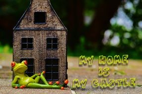 funny frog at home