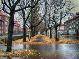 picture of the park in gdansk