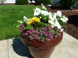 potted plant plants flowerpot
