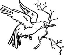 bird flying carrying branches