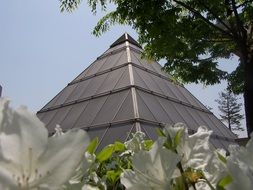 pyramid and white flowers