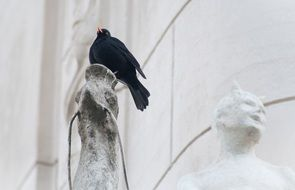 blackbird on statue