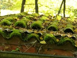 green moss and foliage on a tiled roof