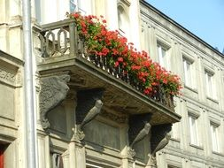 balcony flowers shutters