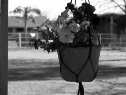 pansy hanging flower pot outside