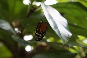 Butterfly on a tropical plant