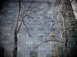 tree and building