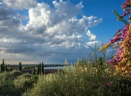 flowers on the shore of Lake Garda