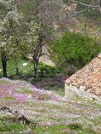 flowers on hill side in old village, greece, corfu, perithia