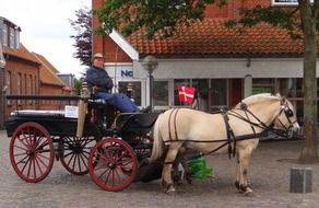 old coachman on vintage carriage drawn by two white horses