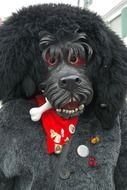 carnival costume black dog