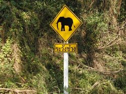 yellow road sign with a image of an elephant