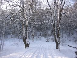 snow winter forest road