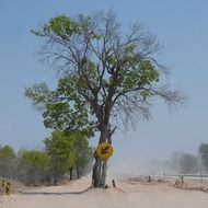road sign on a tree in Africa