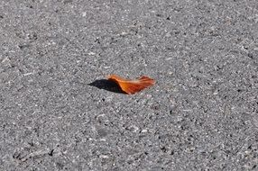 brown leaf on a gray road on a sunny day
