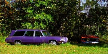 purple car on green grass
