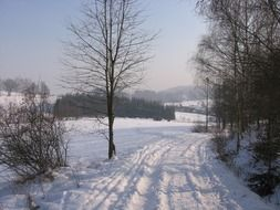winter road near the forest