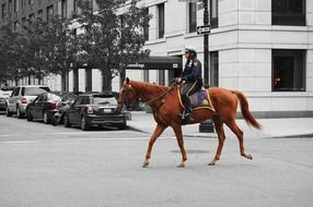 policeman on th horse
