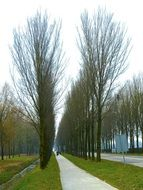 trees along a rural road