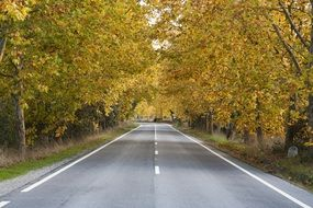 road autumn trees