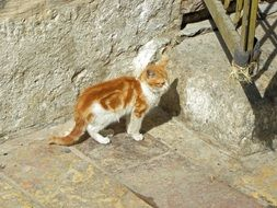 white-red cat against a stone wall